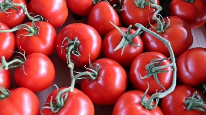 Bir ildə 202 milyon dollarlıq pomidor ixrac etmişik