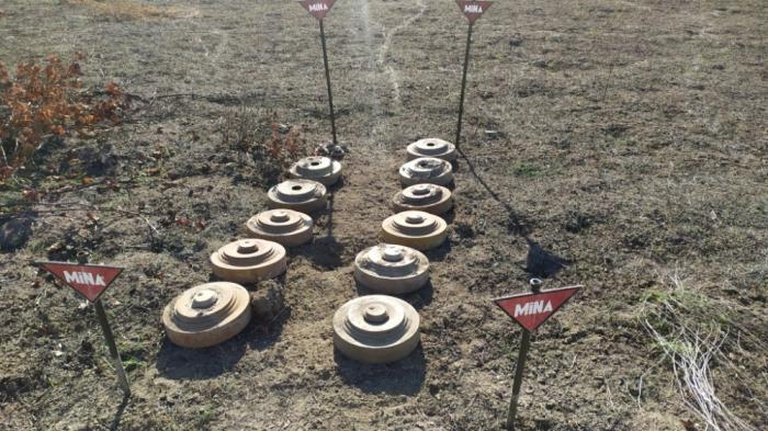 Fronteras estatales despejadas de minas -   FOTOS