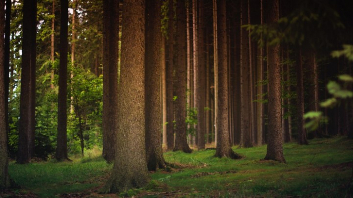 Bundesländer verfehlen deutsches Waldschutz-Ziel