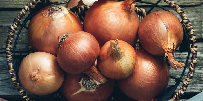 Ukraynadan alınan 20 ton soğan yararsız çıxdı