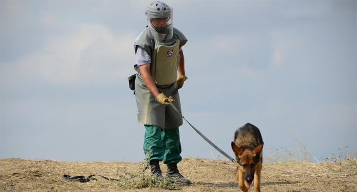 Turkey donates mine detection dogs to Azerbaijani MES