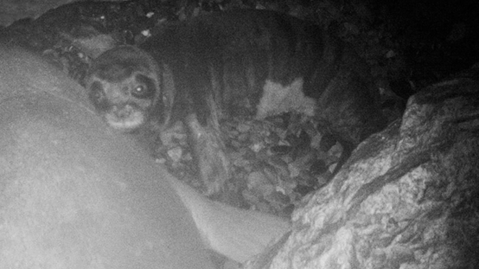 Descubren en Chipre del Norte una importante zona de cría de la foca más amenazada del mundo
