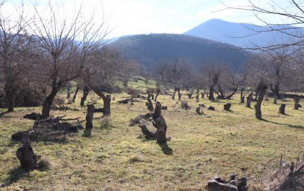 Azerbaijan developing special program to restore forests in liberated lands