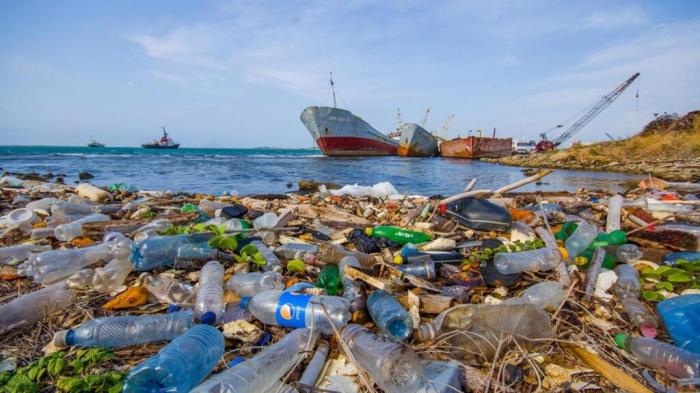Plastic waste kills hundreds of animals in Black Sea - NGO
