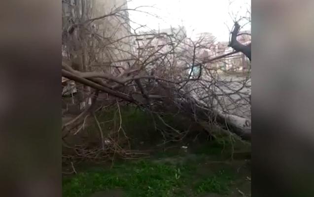 Sumqayıtda külək ağacı qaz borusunun üzərinə aşırdı