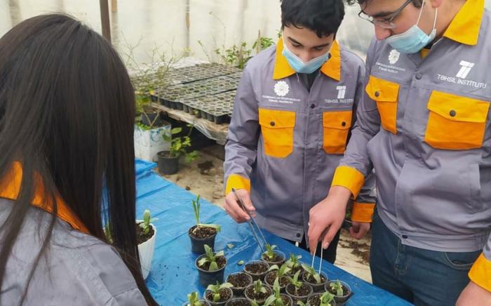 Bakı məktəbində xarıbülbül yetişdirilir -  FOTO