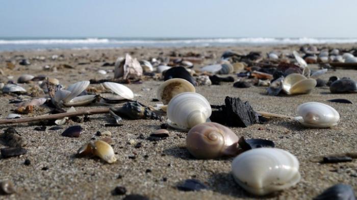Milliardenschäden durch eingewanderte Arten in Wasser-Ökosysteme