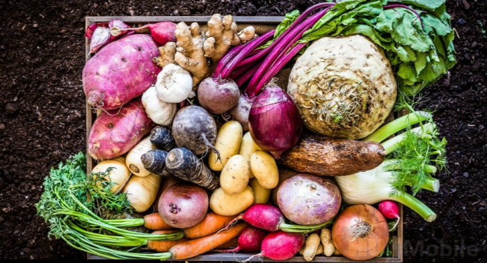 Food, not steel, is our biggest climate challenge -   OPINION