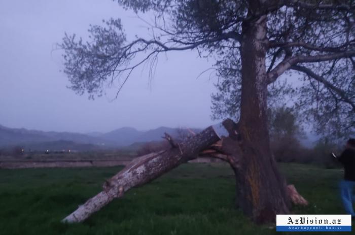 1.500 hectáreas de bosques de Tugay fueron destruidas en Zangilan durante la ocupación armenia
