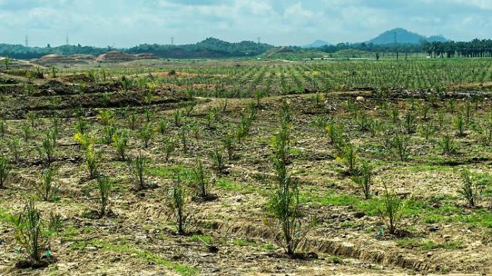 EU ist zweitgrößter Tropenwald-Zerstörer