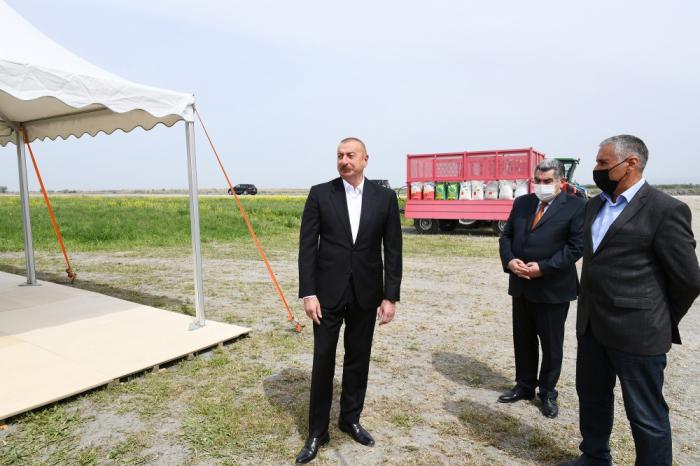 Prezident pambıq tarlasında səpin prosesini izləyib -  FOTOLAR (YENİLƏNİB)
