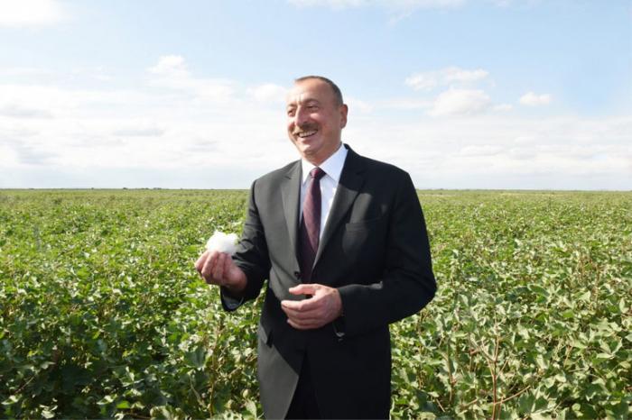 Ilham Aliyev observa el proceso de siembra en el campo de algodón