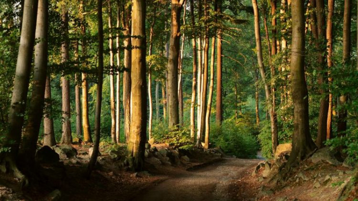 UN report calls for urgent action to restore forests