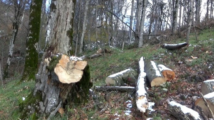 Armenia destroyed 57 hectares of forests in Azerbaijan's Fuzuli – ministry