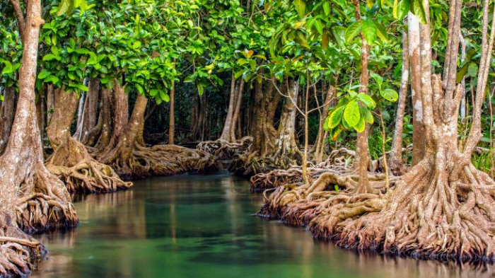 How mangrove forests helped delay environmental crime -  iWONDER