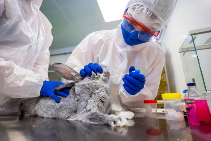 Russia produces nearly 20,000 doses COVID-19 vaccine for animals
