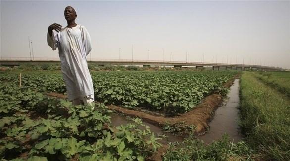 400 مليون دولار من الإمارات والسعودية لدعم الزراعة في السودان
