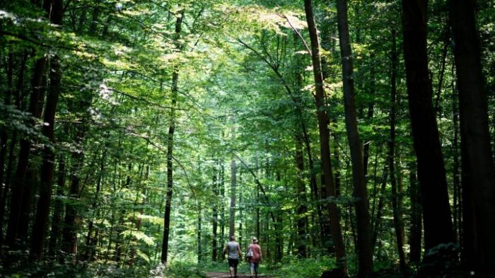 """Parlamentarier planen """"Bundeswaldprämie"""""""