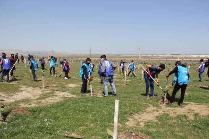 """Continúan las campañas de plantación de árboles en el marco del """"Maratón Verde"""""""
