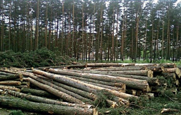 İşğal dövründə Füzulidə 57 hektar meşə sahəsi qırılıb
