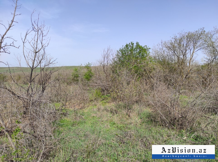 Destroyed forest of Araz oak in liberated Zengilan district -   PHOTOS