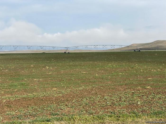 Azad edilmiş ərazilərdə 454 min hektar torpaq sahəsi inventarlaşdırılıb