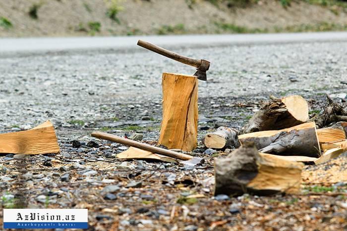 Sumqayıtda ağac kəsilməsi ilə bağlı cinayət işi açıldı