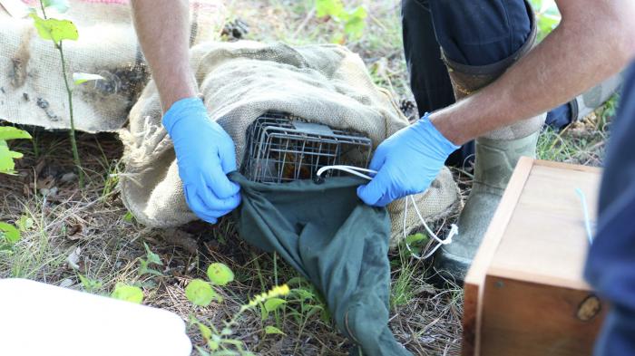 Plüsch-Alligator sorgt für Panik in USA – Foto
