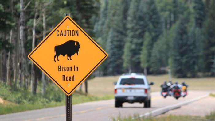 45.000 Amerikaner bewerben sich für Bison-Jagd im Grand Canyon