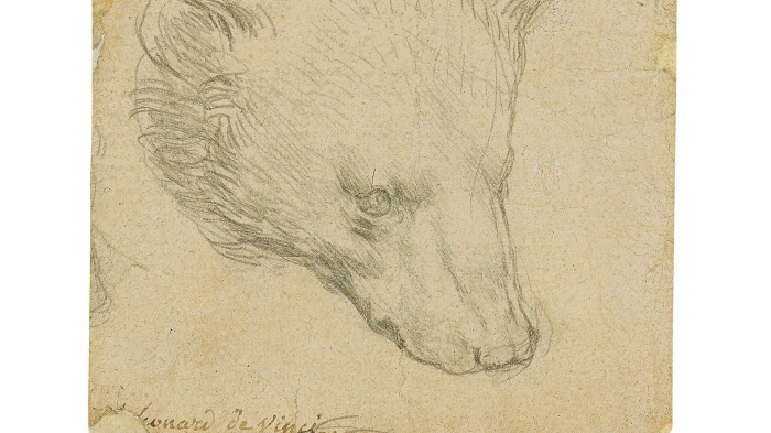 Da Vincis Bärenkopf-Zeichnung kommt zu Versteigerung – Auktionshaus hofft auf Rekord