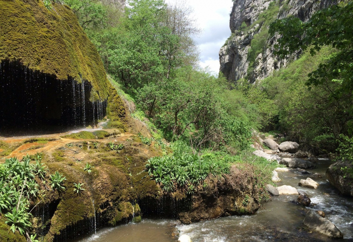 Azerbaijan working to determine damage caused by Armenia to flora, fauna of liberated lands