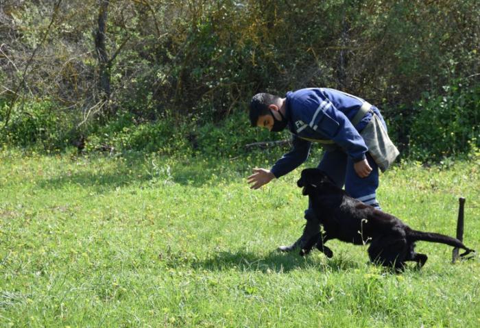 Turkey donates 10 mine-detection dogs to Azerbaijani MES –  VIDEO
