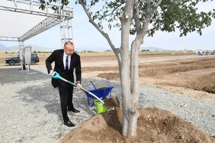İlham Əliyev Ağdam şəhər meşə-parkında ağac əkdi -  FOTOLAR (YENİLƏNİB)