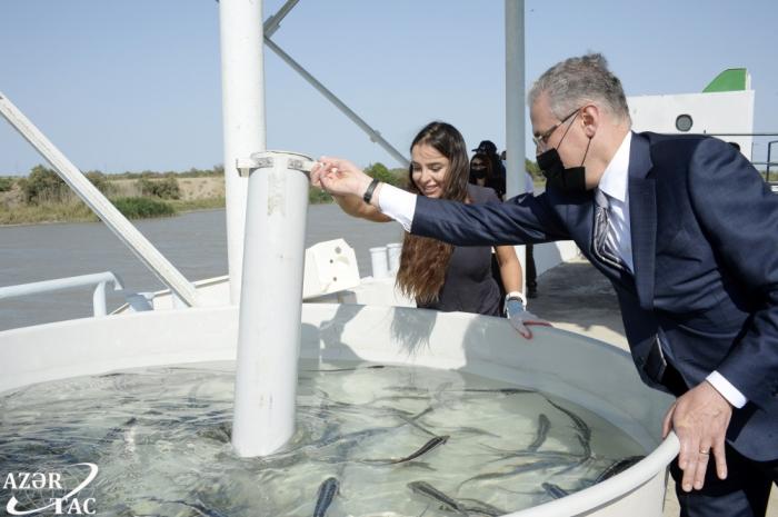 Leyla Aliyeva attends ceremony to release sturgeons into water - PHOTO