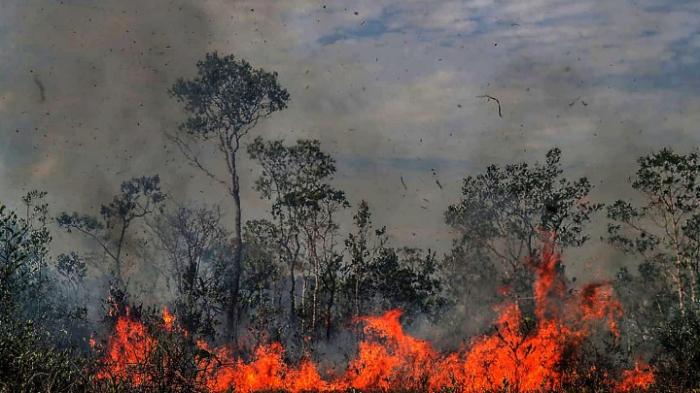Klimawandel zerstört Amazonas-Wälder auch von innen
