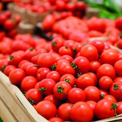 Más empresas azerbaiyanas exportarán tomates a Rusia