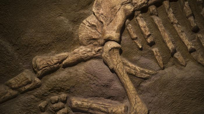 Meksikada yeni növ dinozavrın qalıqları aşkarlandı