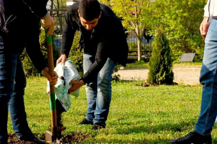 Los castaños de Azerbaiyán crecen en el callejón Shusha de Chisinau