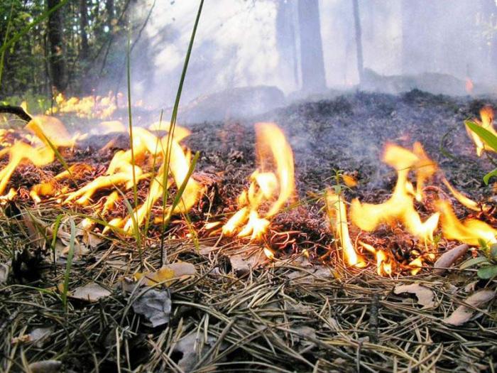 Bakıda ağaclıq ərazi yanıb