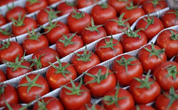 126 müəssisədən Rusiyaya pomidor ixracına icazə verildi