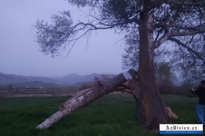 Armenia destroyed 40 hectares of forests in Basitchay