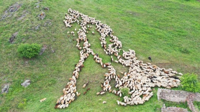 Livestock, beekeeping farms move to pastures of Kalbajar district of Azerbaijan- PHOTOS