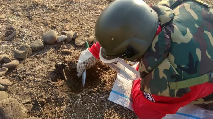 Azerbaijan detects 196 more landmines in liberated territories