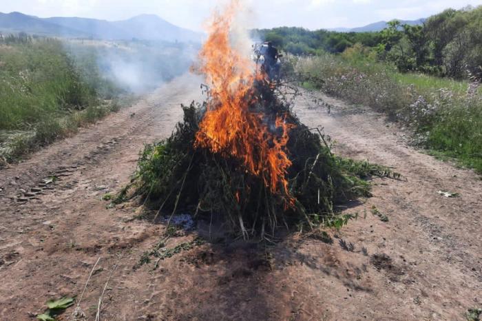 Azad edilmiş kənddə 1 tondan çox narkotik aşkarlandı -  FOTO