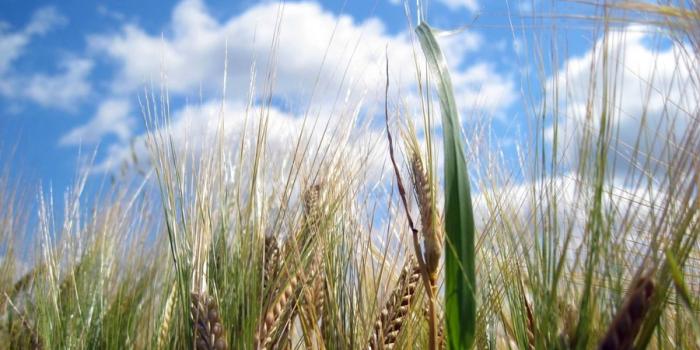 Mein Essen, die Umwelt und das Klima