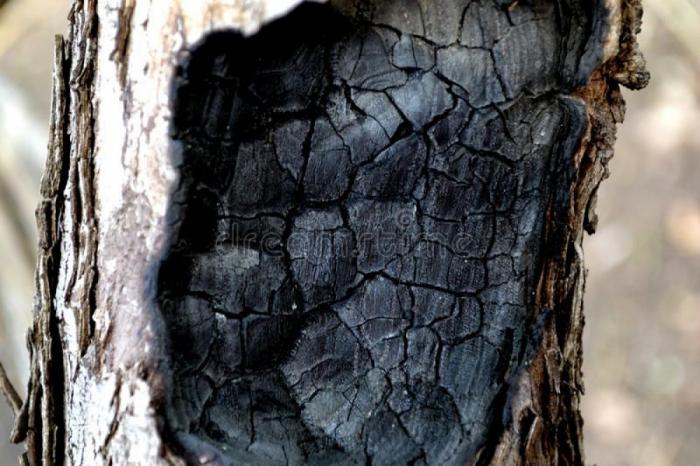 Ağacların yanması ilə bağlı şikayət araşdırılıb