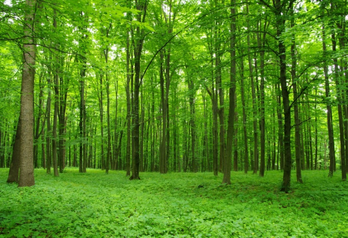 En Azerbaiyán se está implementando proyecto para crear un atlas forestal