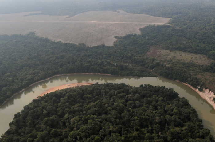 Over 10K plant, animal species at risk of extinction in Amazon