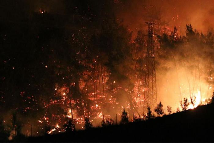 """El Consulado General:  """"No hay azerbaiyanos muertos o heridos en los incendios forestales en Turquía"""""""