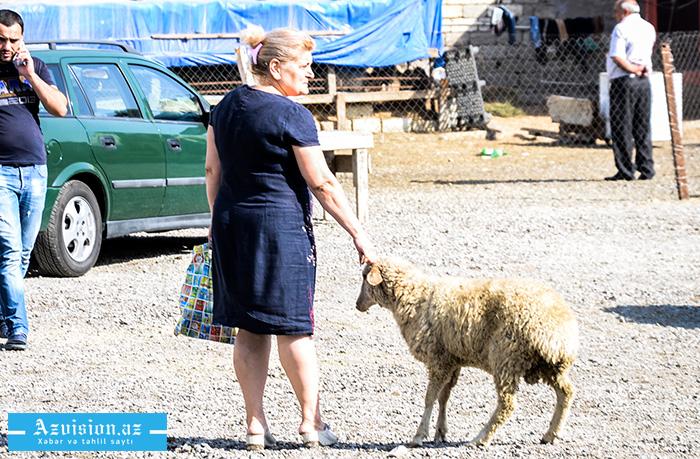 Qurbanlıq heyvanların satışı və kəsimi yerləri -    SİYAHI